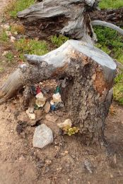 elves on the colorado trail