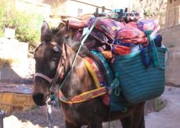 IMG_2525-mule