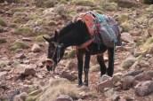 IMG_2595-mule