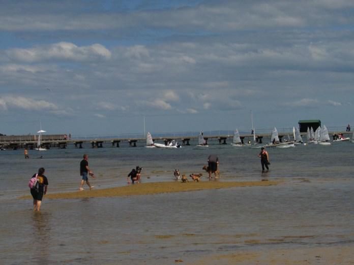 Dog friendly beach along the St. Kilda boardwalk