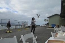 The Seagull Whisperer