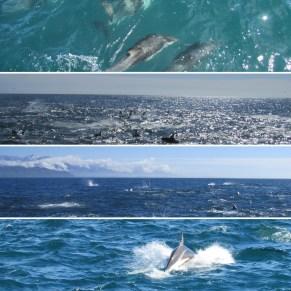 duskydolphins