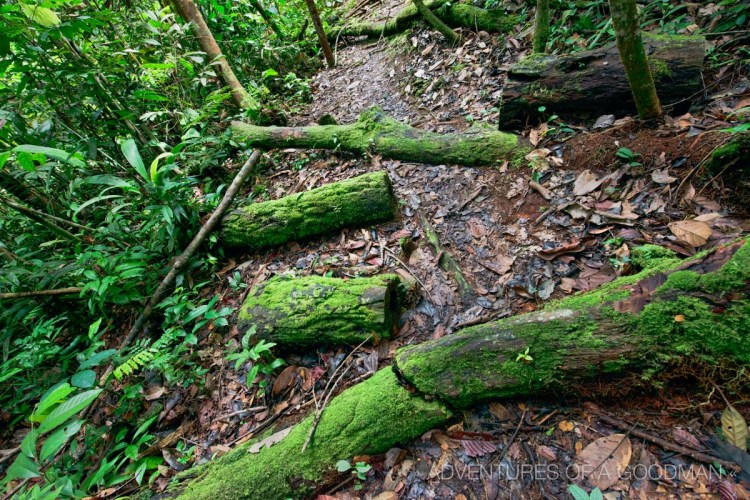 """Footpaths through the Amazon Rainforest are often """"blocked"""" by fallen trees."""