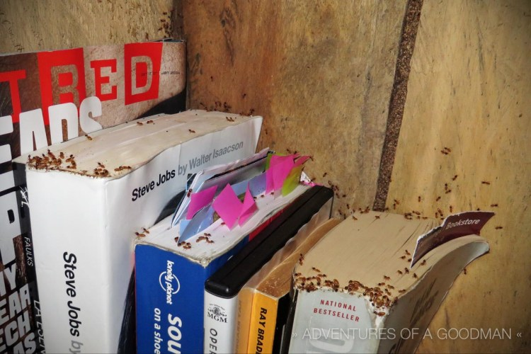 The termites were especially interested in my books. Later that morning, they were all sealed up for the remainder of the retreat.