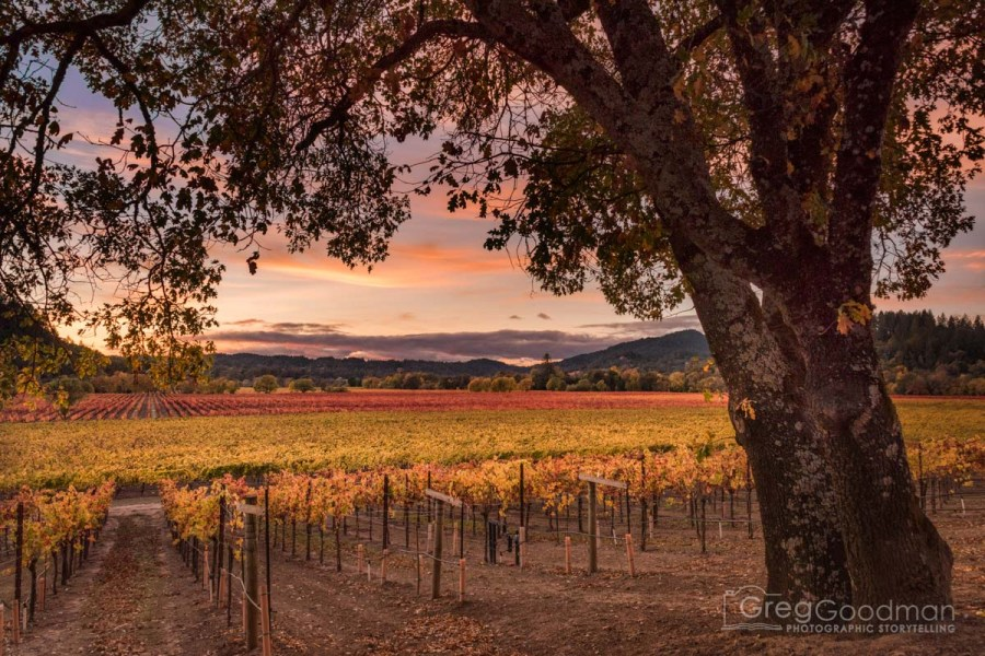 Sunset at the Woolsey Winery in Sonoma County, California