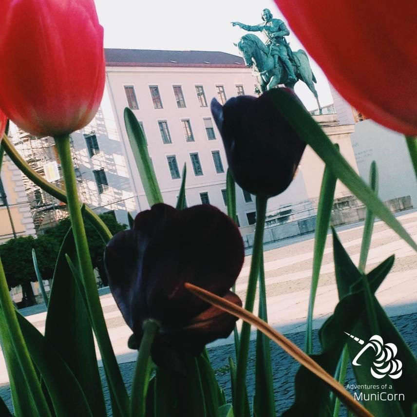 Maximilan and Flowers, Munich