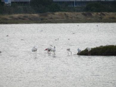 Auf der Jagd nach den Flamingos3