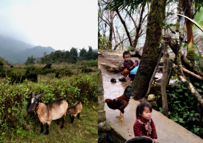 village kids near sapa