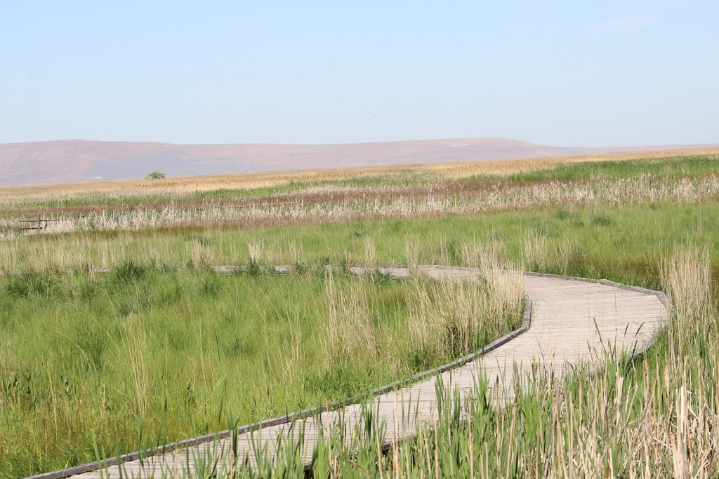 Trail at Great Salt Lake Shorelands Preserve