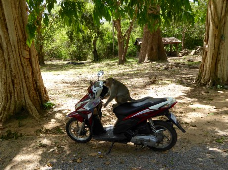 Monkey, riding a motorcycle!