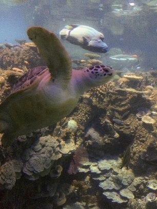 400 lb sea turtle