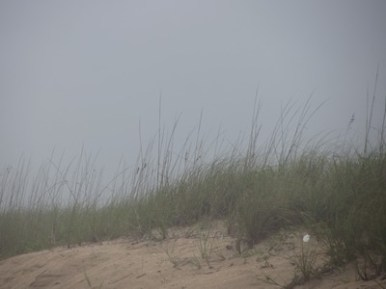 Mist in the sea grasses, Canaveral National Seashore