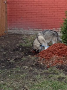 he buried things for a while, til he realized we weren't going to take things from him.