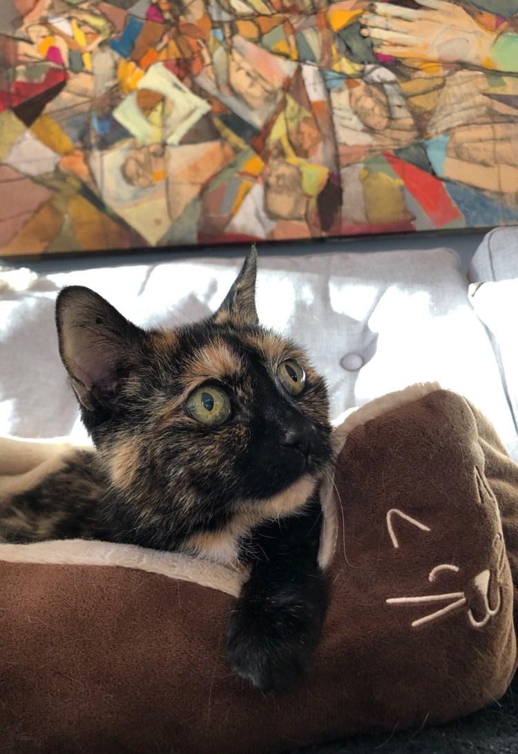 Zoe cat