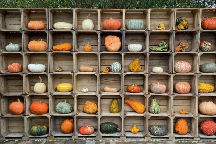 Pumpkin Wall at Nall's Produce