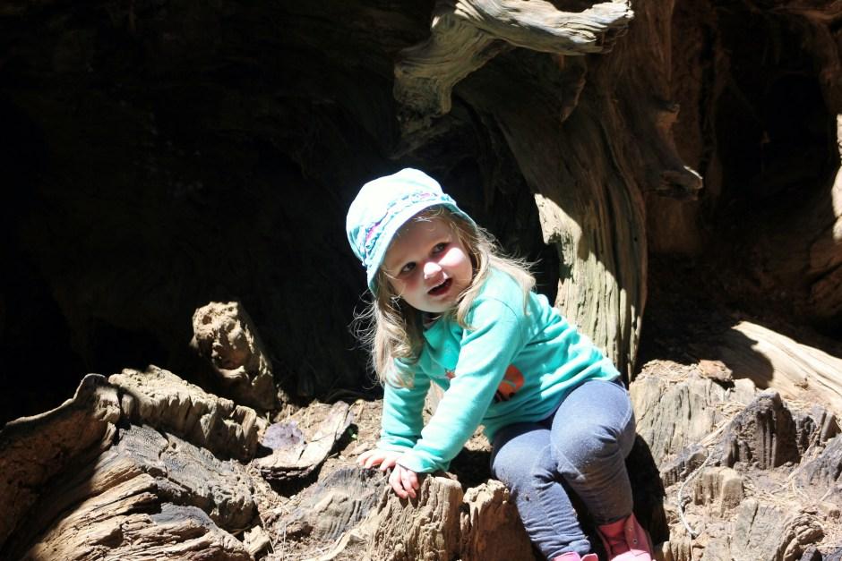 2016-04-19 Yosemite toulumne grove 116