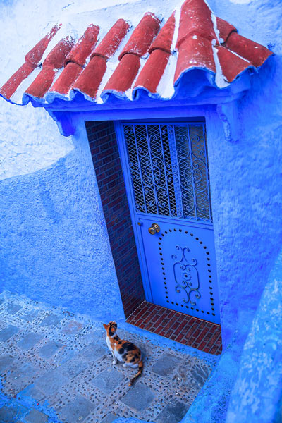 Morocco Cat Door