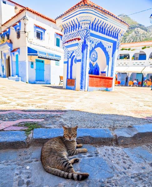 Morocco Medina Cat