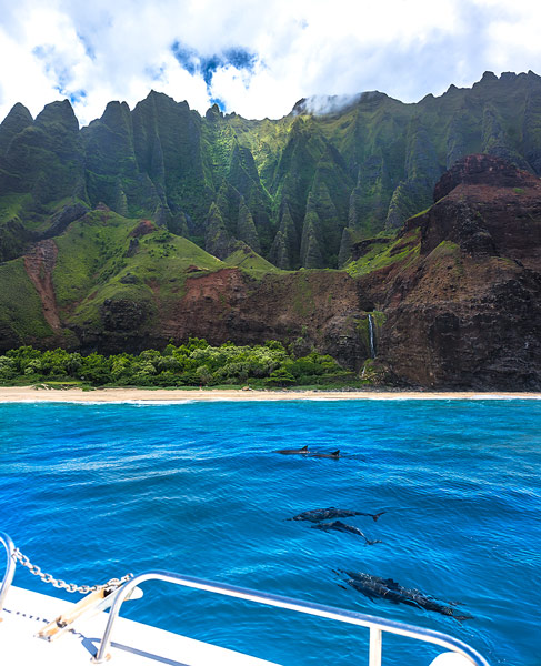 Dolphins Na Pali Coast