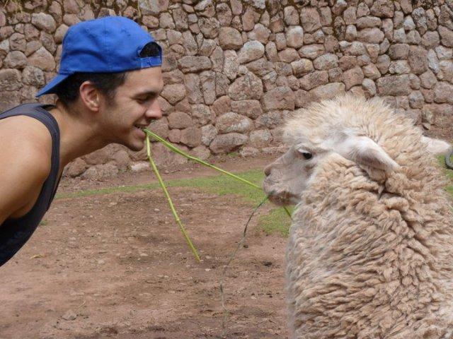"""""""Alpaca farm tug-a-war (Cusco, Peru July 2012)"""""""