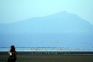 Safari and Flamingos at Lake Natron