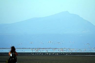 Safari and Flamingos at Lake Natron