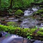 AWR - Monteverde