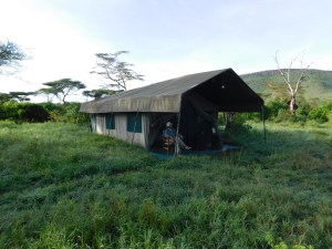 Taking it all in - a standard tent at Halisi Serengeti