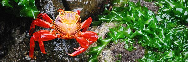 galapagos-crab-1