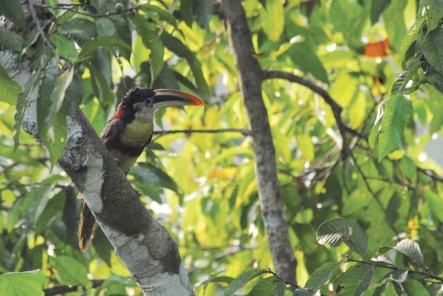 Peru Family Amazon