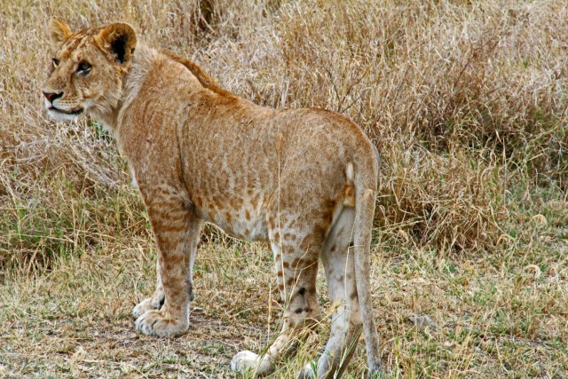 5-day group Tanzania safari