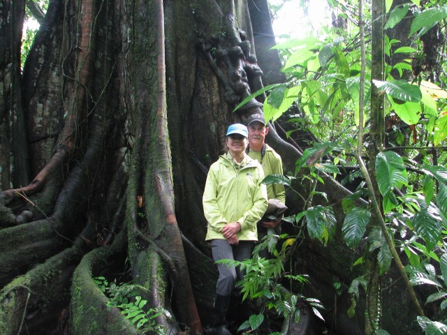 The old growth trees in the Ecuadorian rainforest are incredible!