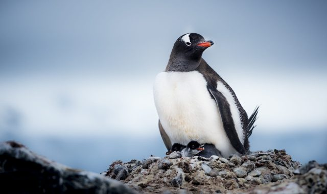 8-Day Antarctica Fly/Cruise