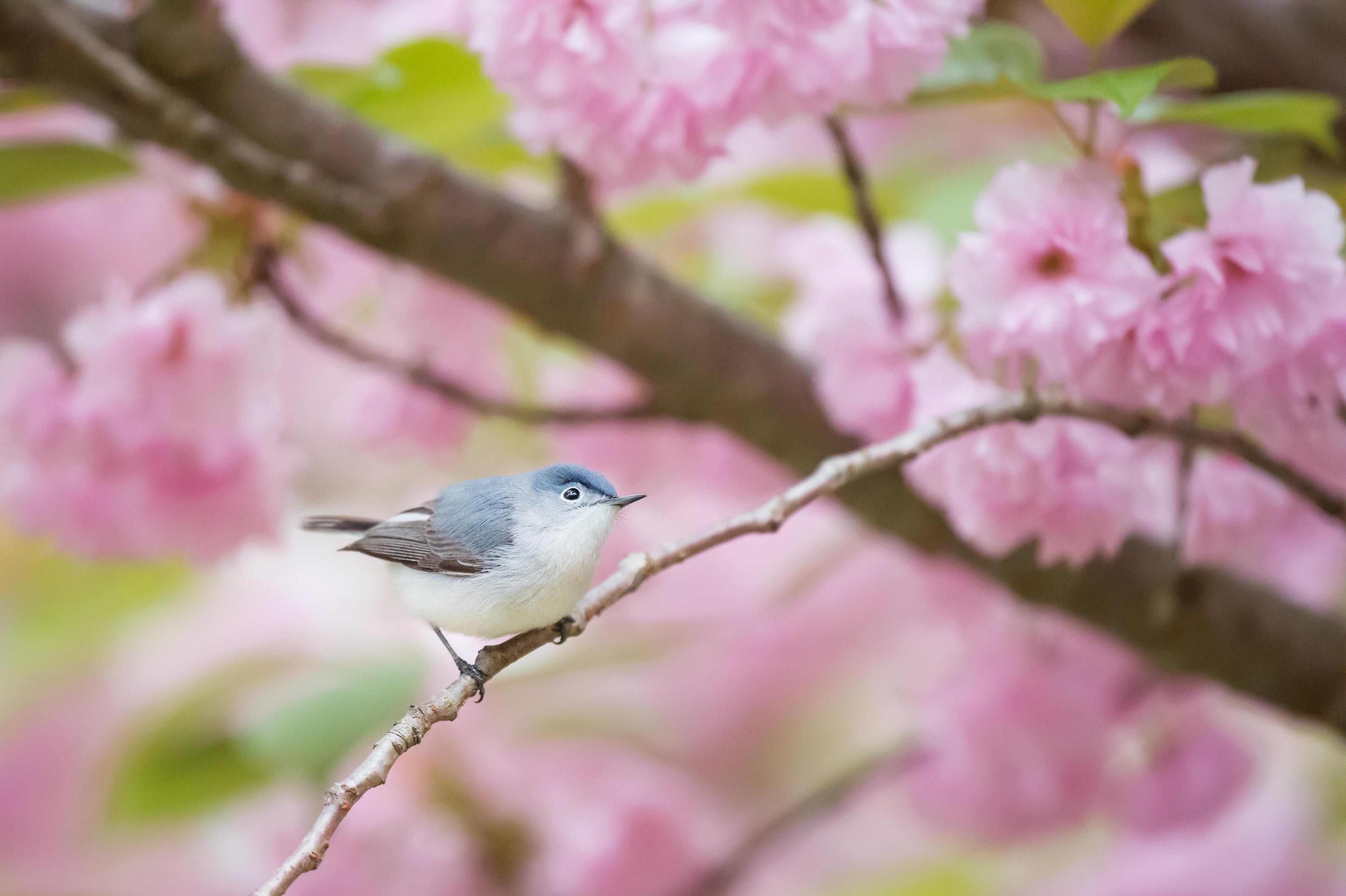 bird on branch of blossom tree