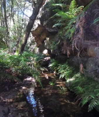 Early on in the creek, we kept coming to sections like this where the creek flowed alongside the cliff-line