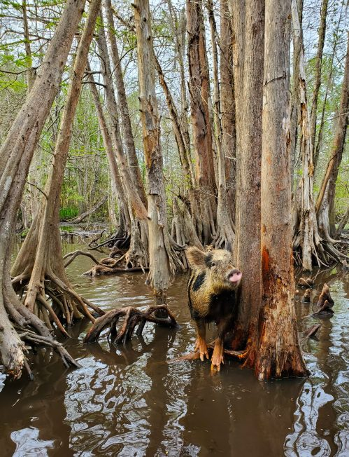 Swamp Tour | Adventures with Shelby