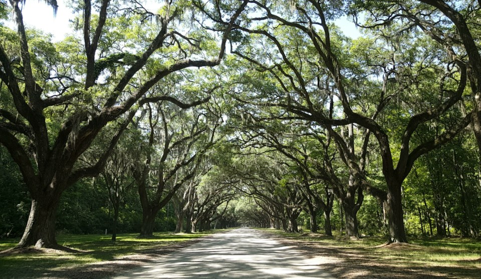 Wormsloe Entrance | Adventures with Shelby