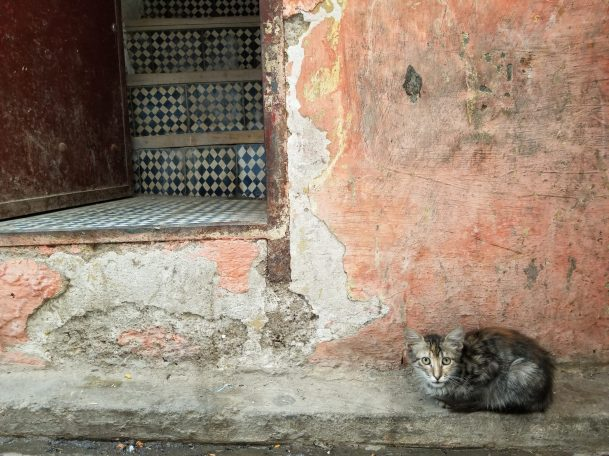 Cats of Morocco | Adventures with Shelby