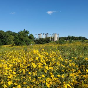 US National Arboretum in the Fall | Adventures with Shelby