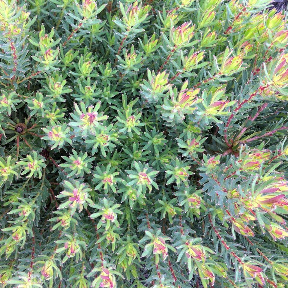 Discover Tasmania's native flora on a tour with Adventure Trails Tasmania