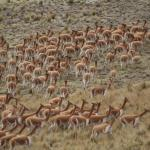 Reserva Nacional Pampa Galeras Barbara D'Achille, Ayacucho Perú