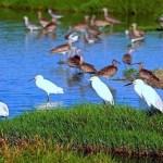 El Refugio de Vida Silvestre Pantanos de villa