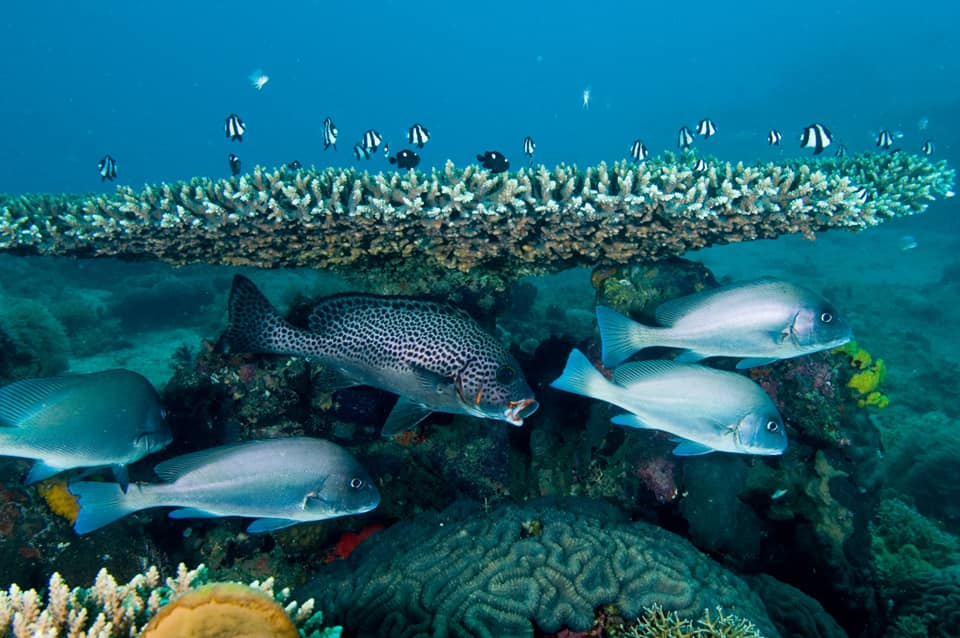 Mozambique, El buceo y el snorkel garantizan un espectáculo deslumbrante bajo el mar.