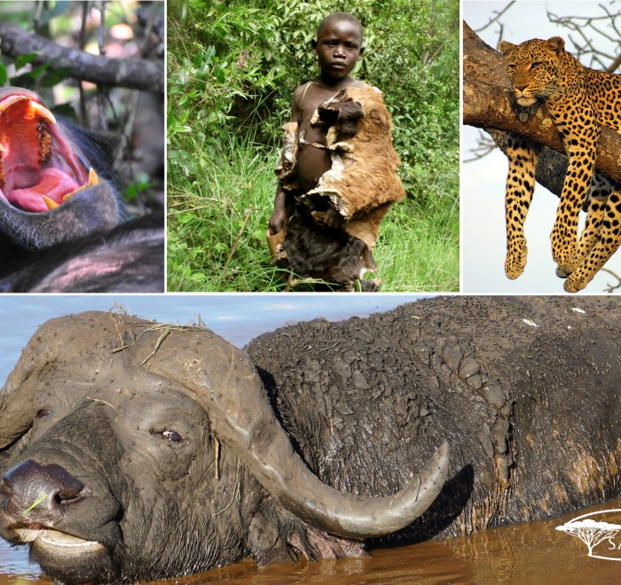 wildlife and Culture