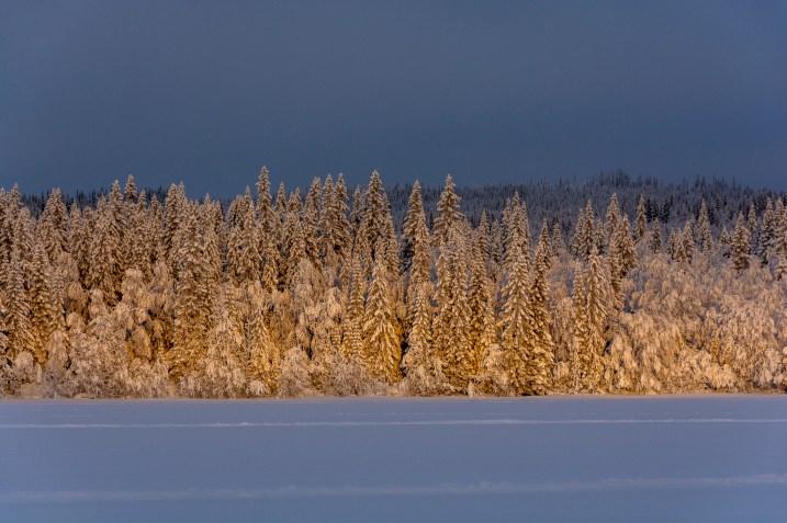 Decemberljus på turskidor i Åre, turskidguide i Åre