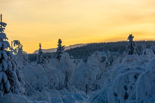Decemberljus på turskidor i Åre, foton till försäljning, online