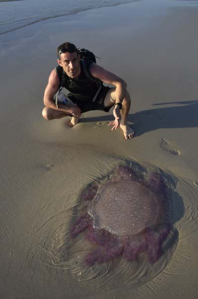Now THAT is a big jelly fish!