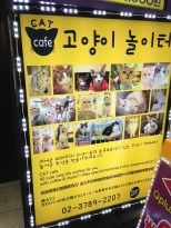 Will spotted a cat cafe - I didn't even know these existed. Had to take a look!