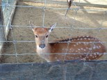 Close-up. They were separate from the adult deer.