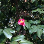 Looked like the hibiscus flower, one of my favorite. But it looked a bit different.